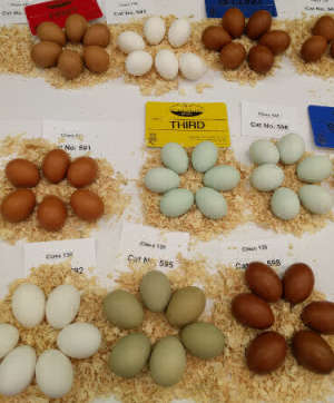a selection of eggs