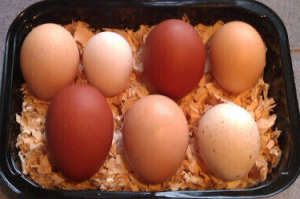 a selection of eggs from my hens